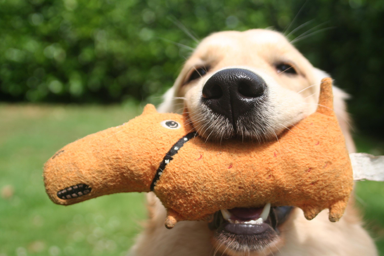 Natuurlijke behoeften van de hond deel 1 monique bladder - Hoe een studio van m te ontwikkelen ...